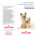 ЧИХУАХУА - Breed Nutrition - Royal Canin