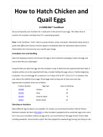 How to Hatch Chicken and Quail Eggs - Carolina Biological