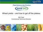 Wheat yields – and how to get off the plateau