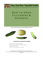 HOW TO GROW CUCUMBERS  GHERKINS - Grow Your Own