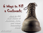 6 Ways to Kill a Cockroach: How to Rid Your Home of Roaches, Ants