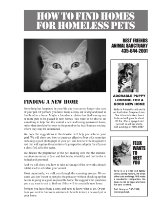 HOW TO FIND HOMES FOR HOMELESS PETS - No Kill Advocacy