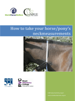 How to take your horse/ponys neckmeasurements - Animal Health