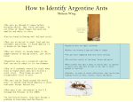How to Identify Argentine Ants - The LSU AgCenter