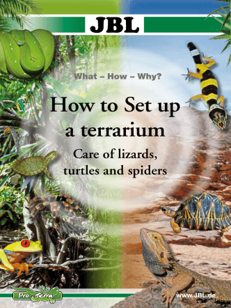 How to Set up a terrarium - JBL