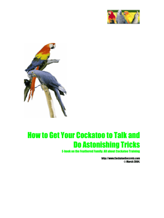 How to Get Your Cockatoo to Talk and Do Astonishing Tricks - Parrots