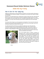 Aging Dog Care - Homeward Bound Golden Retriever Rescue