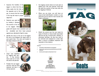 How to tag your goats - final