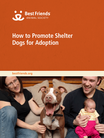 How to Promote Shelter Dogs for Adoption - Best Friends Animal