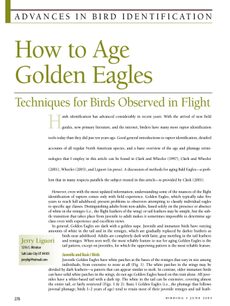 How to Age Golden Eagles - American Birding Association