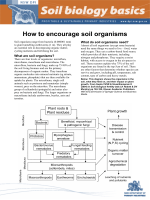How to encourage soil organisms - NSW Department of Primary