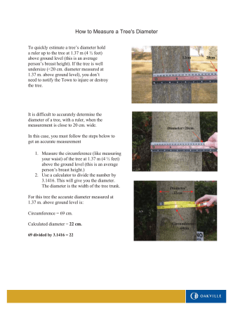 How to Measure a Trees Diameter - Town of Oakville
