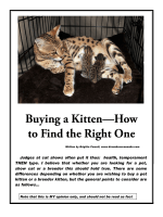 Buying a Kitten—How to Find the Right One - Kirembo Savannahs