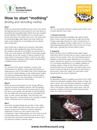 "How to start ""mothing"" - Moths Count"